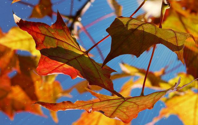 fall-equinox-2015